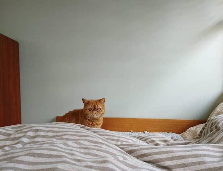 【猫との暮らし】ふわふわベッドでくつろぐ、猫たちの生活風景