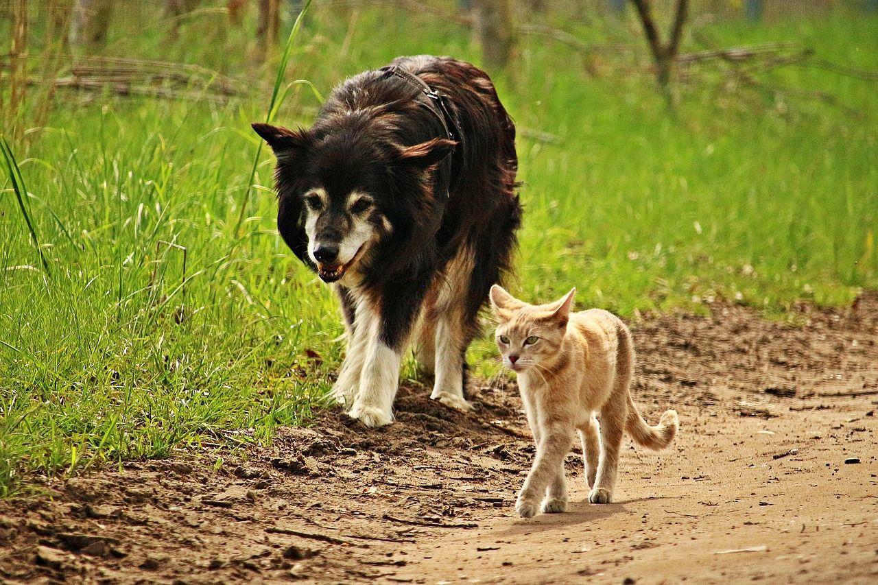 犬と猫の足跡を見分けることができますか? 犬と猫の肉球の違いを解説