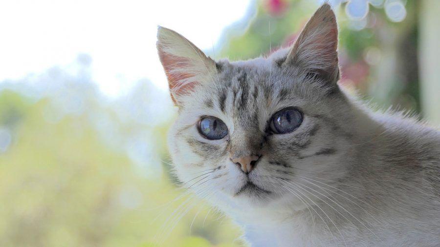 猫が掘るような行動をするのはなぜ? トイレや布団、餌をホリホリする猫の気持ち