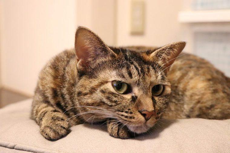 愛猫は掃除機が好きor嫌い? 怖がる理由とストレス軽減のためにできること