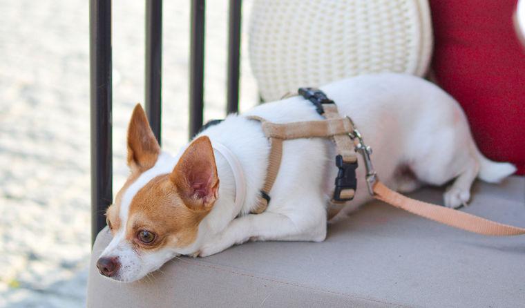 犬の腎不全を腎・泌尿器科担当獣医が解説 急性・慢性の違いや原因・治療・予後まで