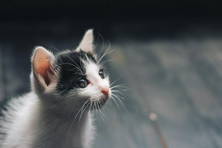 猫を拾ったらどこに相談する? 警察や動物病院に行くべき理由とその後の対応