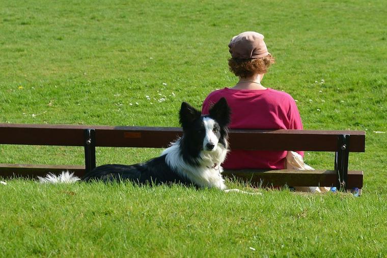中型犬はしつけしやすい? 小型犬・大型犬との違いや意識すべきポイントを解説