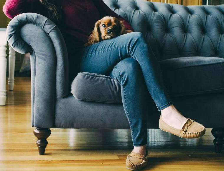 犬がテレビを見るのは好きだから? テレビに反応する理由と注意点について