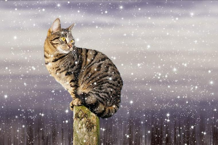 猫は雪が嫌いって本当? 嫌いな理由と雪が好きな猫の霜焼けなどの注意点