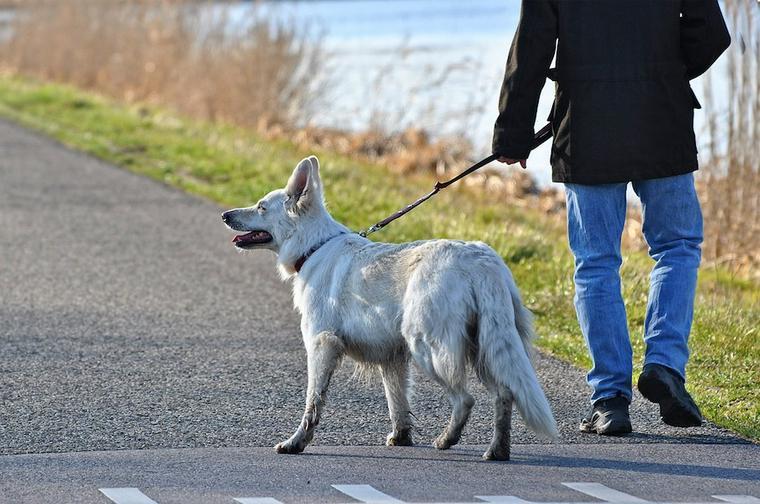 犬がリードを引っ張るのを何とかしたい! 上手な散歩のさせ方と注意点について