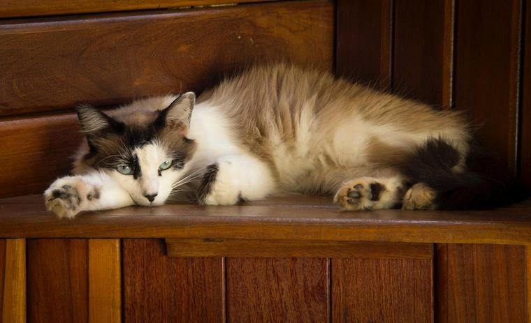 猫がため息をつくときの気持ちとは 呼吸との違いや病気の可能性
