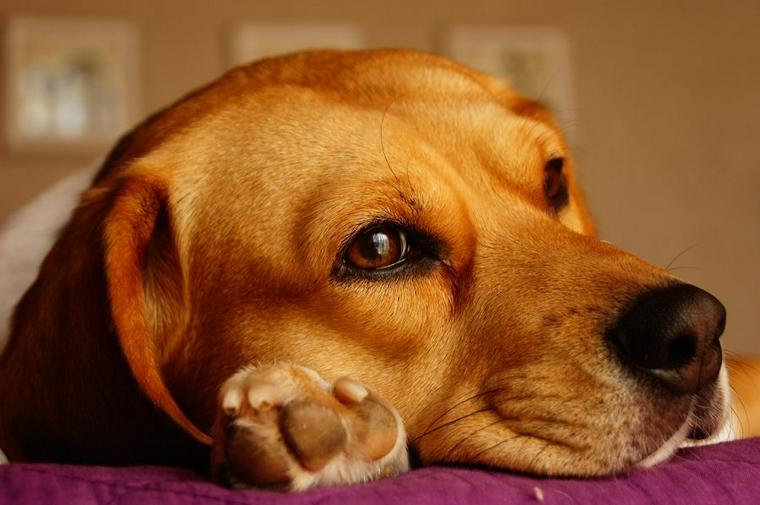 犬の肉球の役割とケアの方法 やけどや乾燥などでめくれてしまうことも!