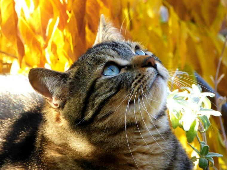 猫も秋になると食欲が増すの? 季節の変わり目は「秋バテ」など体調変化に要注意