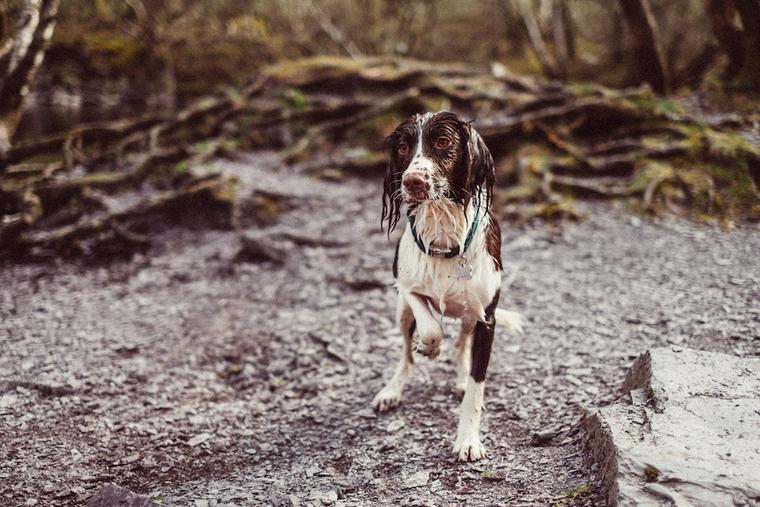鳥猟犬とはどんな犬たち? 他の猟犬との違いや代表的な犬種を紹介