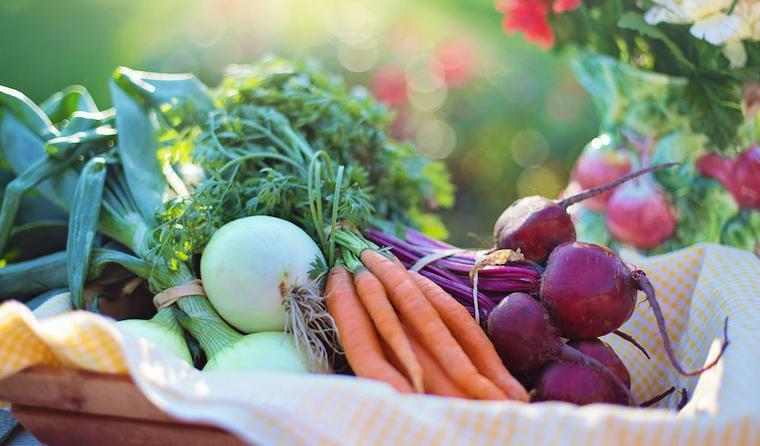 猫は野菜を食べても大丈夫? 体によい野菜&食べると危険な野菜まとめ