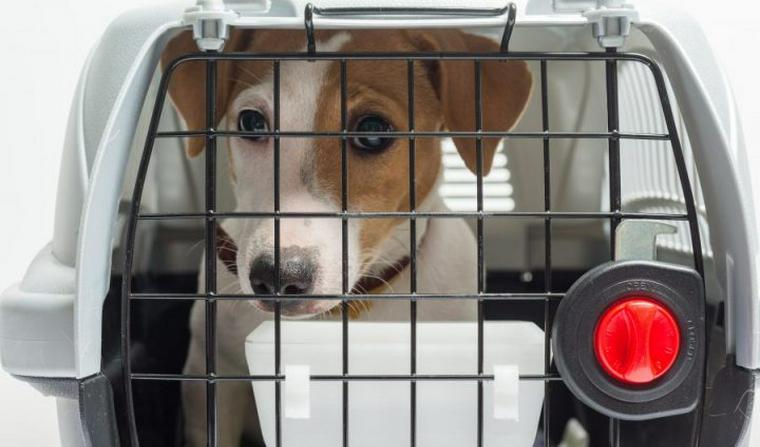 犬のクレートおすすめ7選|折りたためるものや飛行機に乗ることも出来るものもご紹介