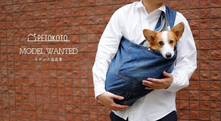 【モデル犬猫募集】ペトことのグッズモデル犬猫募集がはじまります!