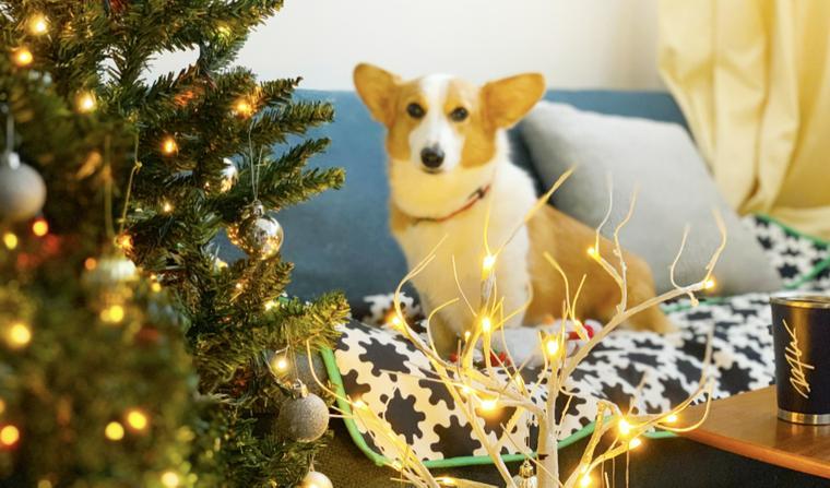 オフィスをクリスマス仕様にしました♪ 【今日のシロップ】
