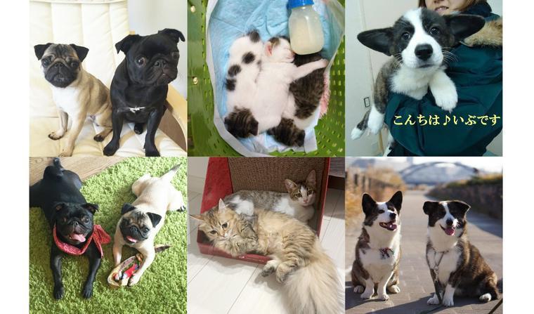 再会した姉妹犬/先住犬猫のいる家に保護犬猫を迎えた家族たちの話