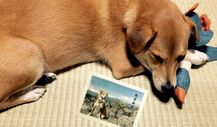 【2019年・亥年】犬年賀状のアイデアを紹介♪ イラスト・写真からかぶりものまで