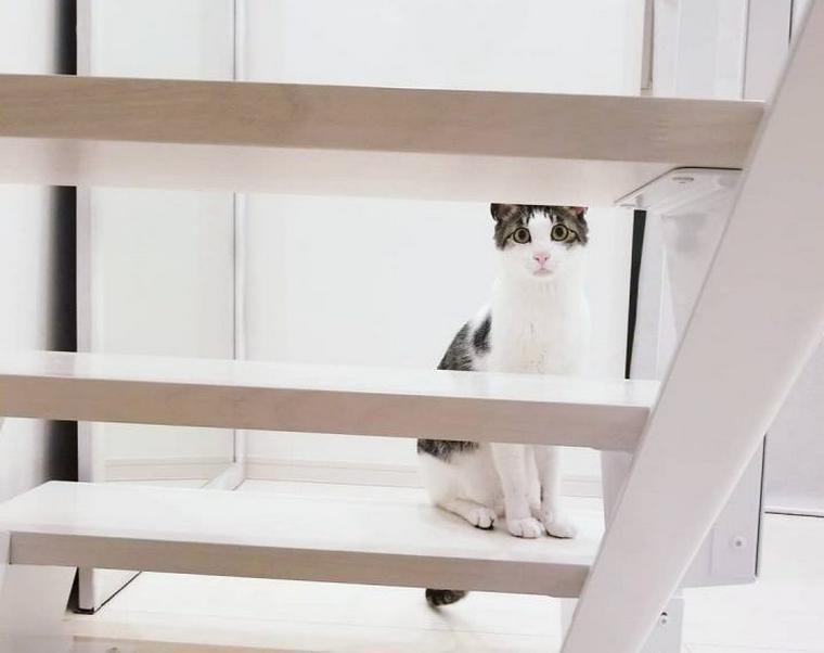 【猫との暮らし】小さなスペースも猫たちの遊び場 階段が大好きな猫たちのいる風景
