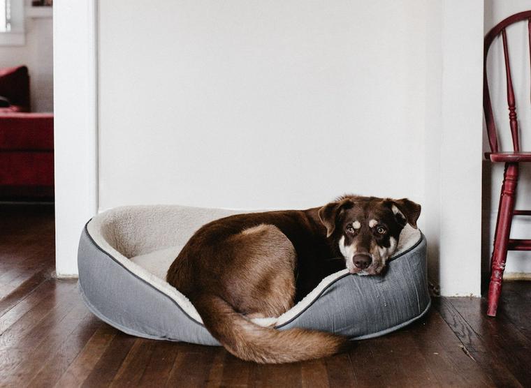 犬が夜寝ないのはなぜ? 落ち着きがない、吠えるのには理由があります。