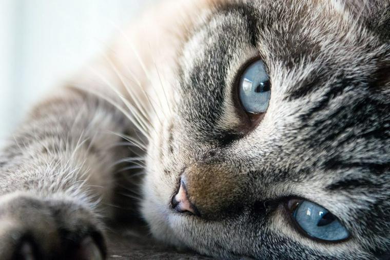 猫のいたずらにイライラしちゃう? しつけと防止対策でストレスフリーへ