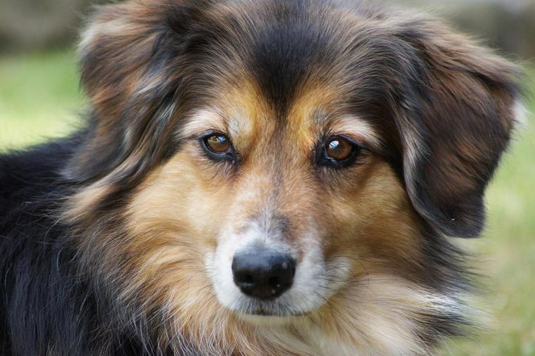 犬が臭いと感じたら病気やストレスの可能性も においの原因を知って適切な対策を