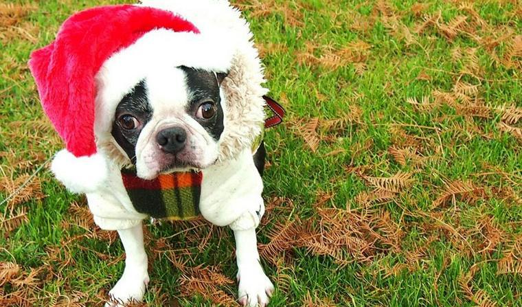 【2018年版】愛犬とのクリスマス! 犬用ケーキやプレゼントで思い出に残る記念日を