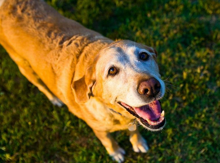 老犬でもしつけはできる? トイレの覚え直しや無駄吠え、噛む理由を解説