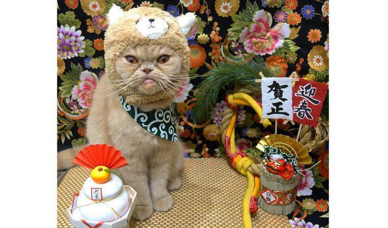 【2018年版】猫の年賀状を戌年に!? かぶりものを使った「にゃん賀状」や無料素材を紹介