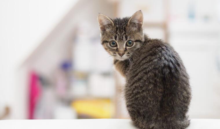 猫のマーキングを獣医師が解説 スプレー行動の原因と治療法