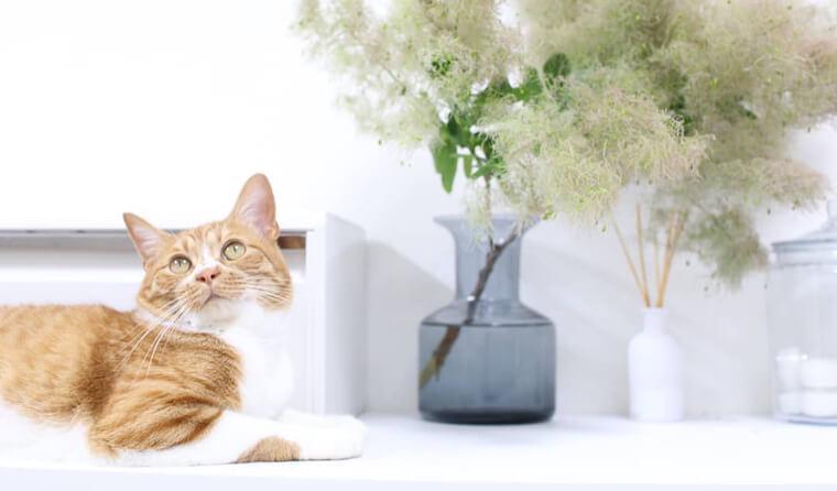 白背景と小物を生かして愛猫をかわいく♪ 人気インスタグラマーさんに聞く【猫の写真の撮り方】