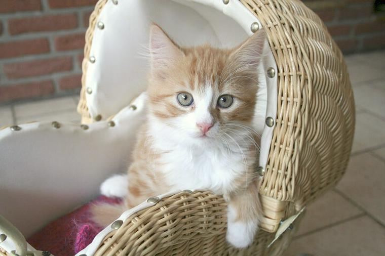 猫を迎えることが決まったら♪|揃えるべきおすすめの飼育グッズをご紹介