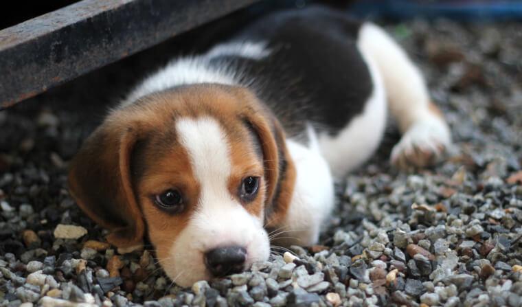 イギリス・イングランド地方で子犬・子猫を販売禁止の方針へ イギリスのペット事情を解説
