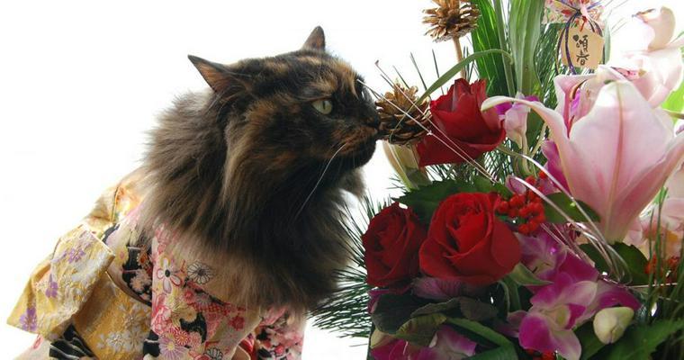 【2019年版】亥年に作る愛猫の年賀状♪ かぶりもの写真などオススメデザインを紹介