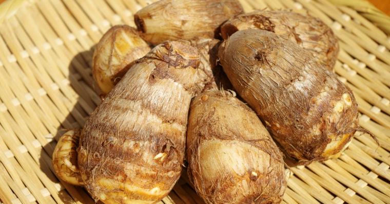 猫は里芋を食べても大丈夫? シュウ酸カルシウムに結石のリスク
