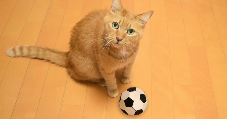 猫はボール遊びが大好き! 飼い主さんに持ってくる理由やボールの選び方を紹介