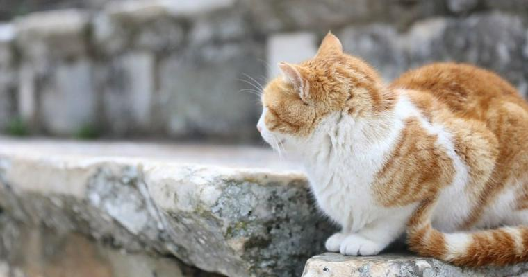 猫に厄年があるって知っていますか? 猫の厄払い神社をご紹介