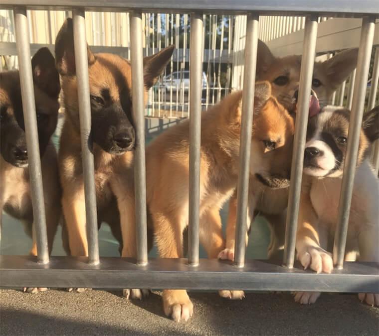 犬猫の引き取り数全国1位でも殺処分率は全国35位。愛知県が抱える課題と動物愛護センターが変える未来と
