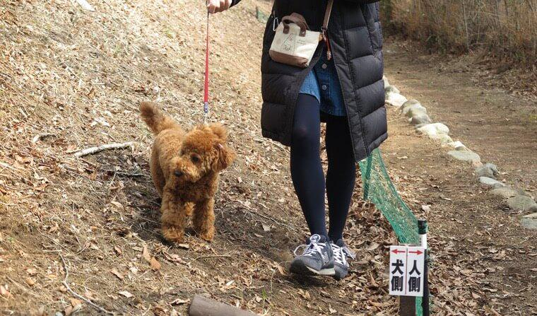 【今日のシロップ】那須の自然で都会のワンコが目覚める!? 「愛犬健康DAY」レポート