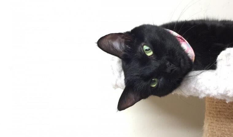 【猫の写真の撮り方】ケニアドイさんが教えるスマホカメラの撮影テクニック
