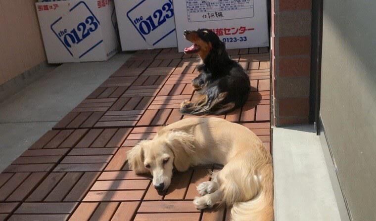 犬との引っ越し体験レポート 事前準備や注意点、ストレス軽減のポイントを紹介