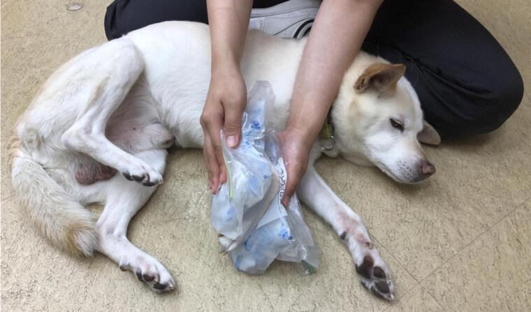 犬の捻挫|足をかばっているときは注意 治療法から予防法まで整形外科担当医が解説