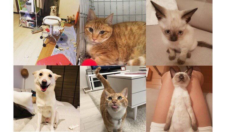 沖縄から来た愛犬/ダーリンは愛護センター出身 保護犬猫を迎えた家族たちの話【#OMUSUBIさとおや部Vol.2】