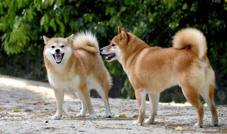 狂犬病で注意すべきは犬だけではない!? 清浄地域から外れた台湾の調査報告を紹介