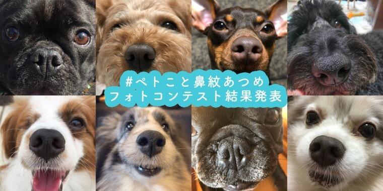 豪華賞品は誰の鼻に!? ペトこと犬部「鼻紋あつめ」フォトコンテスト結果発表