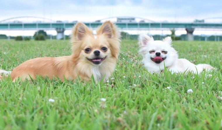 犬も表情を使ってコミュニケーションしていた!? 眉毛を動かす意外な理由を海外論文から紹介