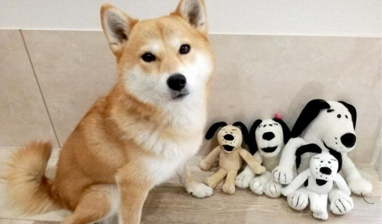 犬は「偽物の犬」に嫉妬する? ライバル出現時の反応を海外論文から紹介