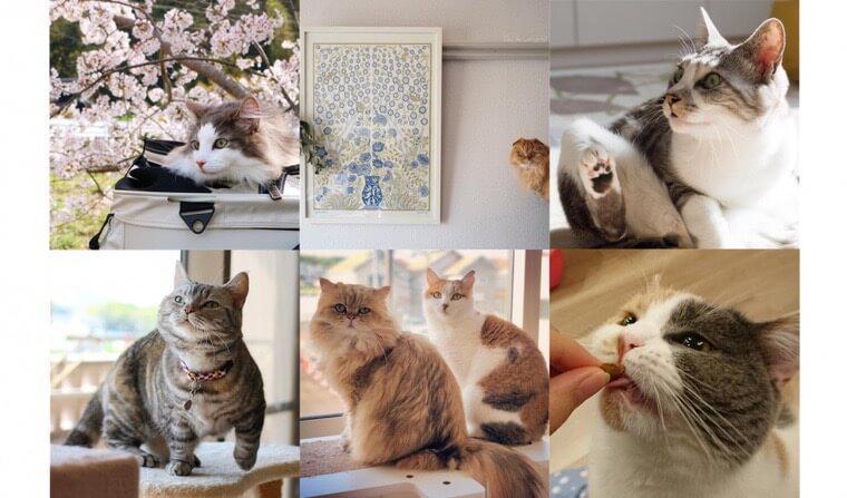 """【ペトこと編集部厳選!】""""今週の猫のいる生活"""" Vol.5"""