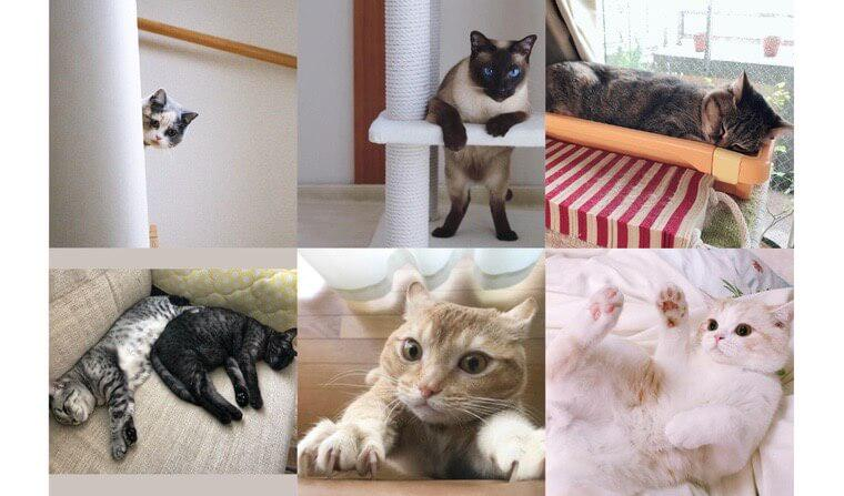 """【ペトこと編集部厳選!】""""今週の猫のいる生活"""" Vol.8"""
