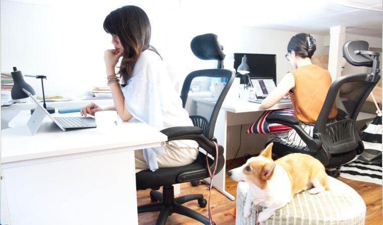 アメリカには「犬を職場に連れて行く日」がある!? みんなが考えるべき意外な目的とは