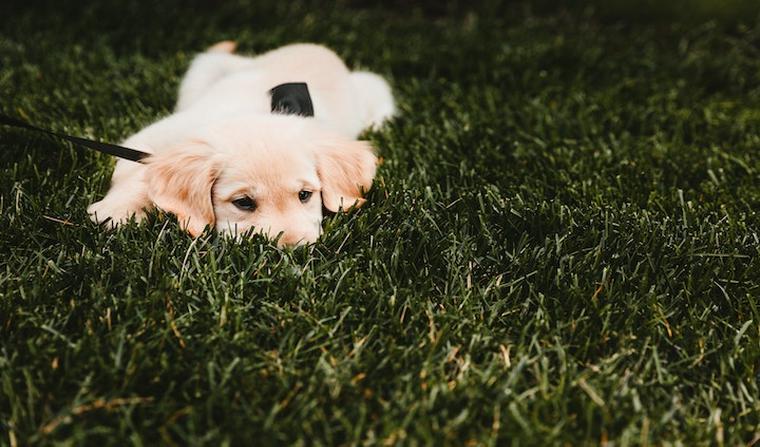 犬が病院を嫌がる理由とは 動物病院へスムーズに連れて行くための方法【獣医師監修】