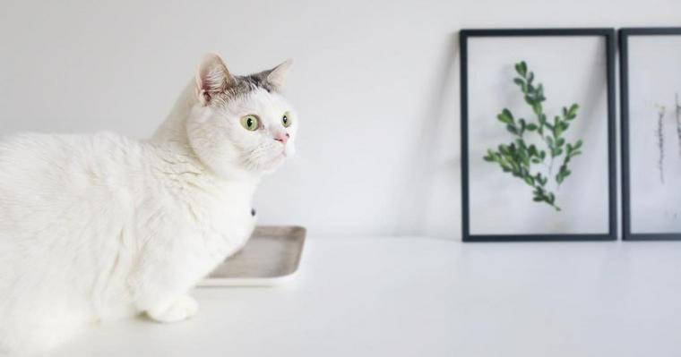 猫の手だけでも魅力的な写真に!? 光と余白を生かして愛猫をかわいく♪【猫の写真の撮り方】